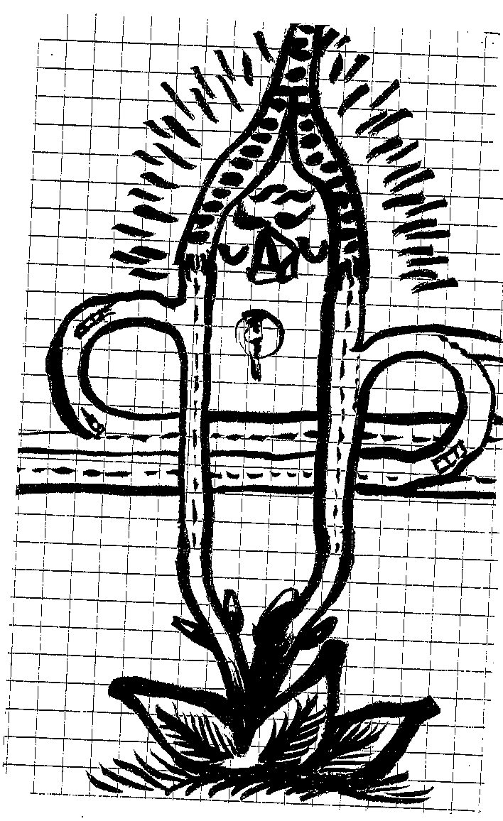 Corpse 43